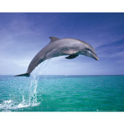 Dolphin Jumping - Mini Poster - 40 x 50cm