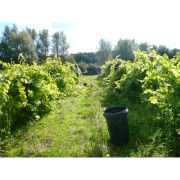 Vineyard Tour and Tasting with Lunch for Two Special Offer