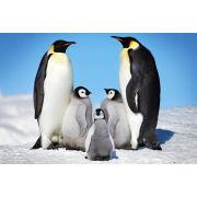 Penguins Family - Maxi Poster - 61 x 91.5cm