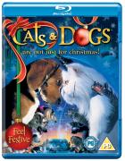 Cats & Dogs (Festive 2010)