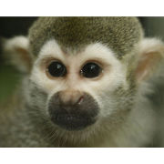 2 for 1 Monkey Tour with Afternoon Tea Special Offer