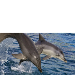 Dolphin and Whale Watching for Two