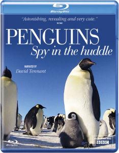 Penguin Spy in the Huddle