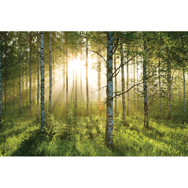 Forest scene wall mural iwoot for Wall scenes