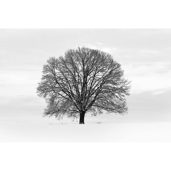 Silhouette black and grey tree wall mural homeware for Black tree mural