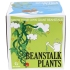 Sow and Grow Beanstalk Plants: Image 1