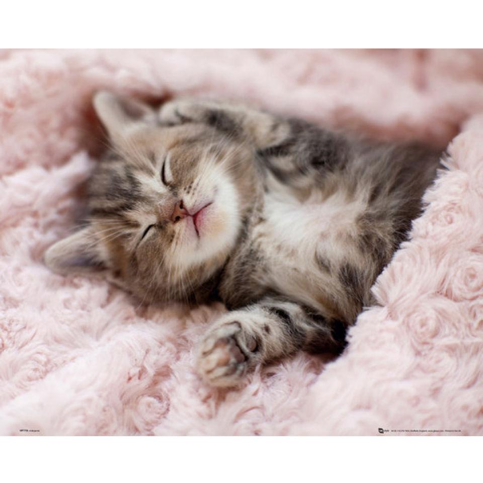 kitten-sleeping-mini-poster-40-x-50cm