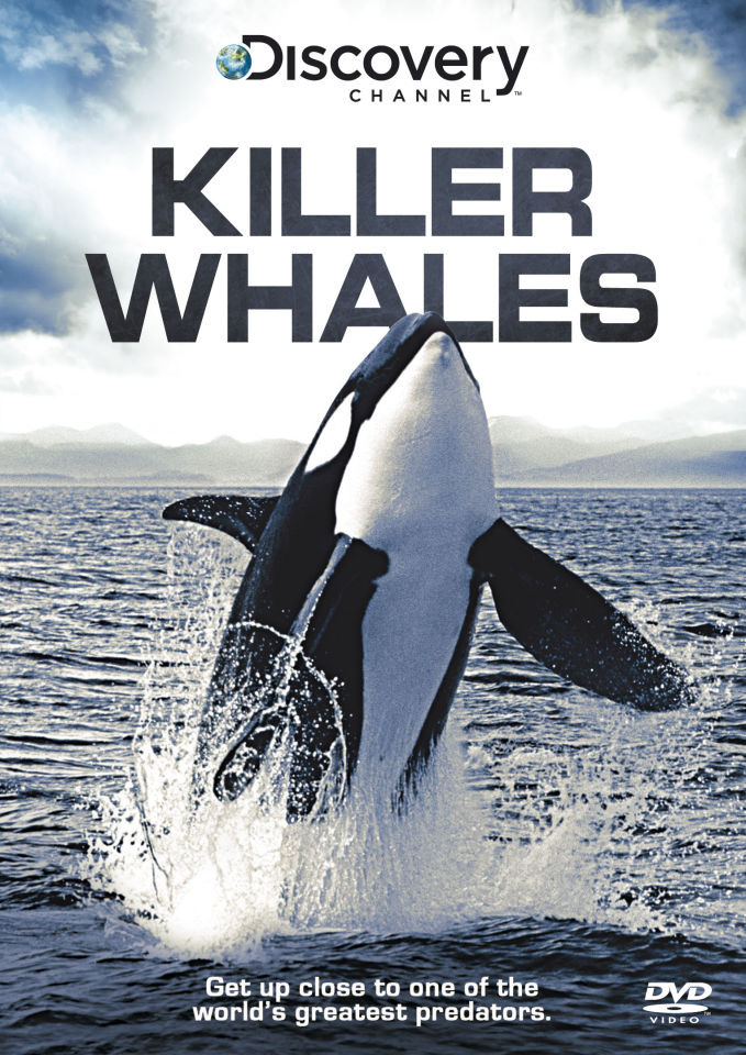 discovering the characteristics of killer whales Learn about the characteristics of cetaceans how they survive in the ocean cetaceans - whales, dolphins, and porpoises  fascinating facts about killer whales or .