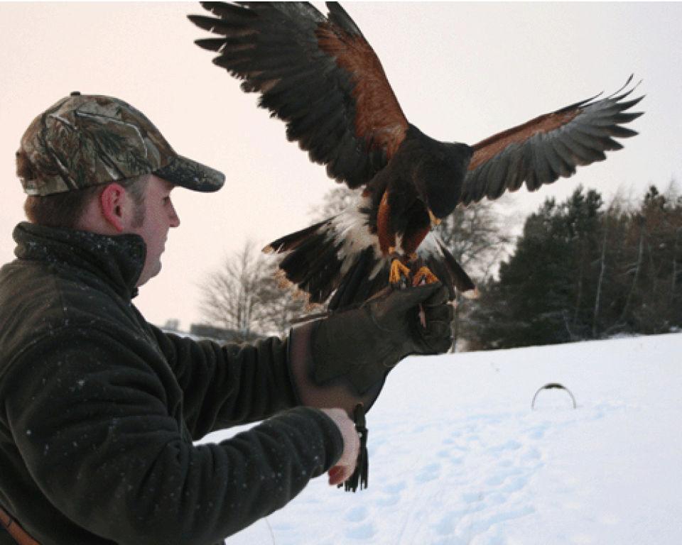 bird-of-prey-half-day-experience-wide