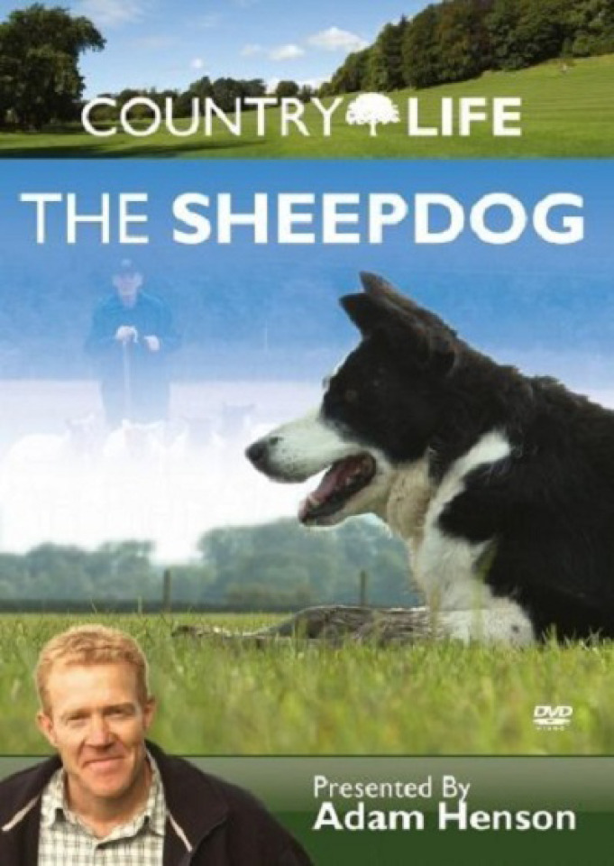country-life-the-sheepdog