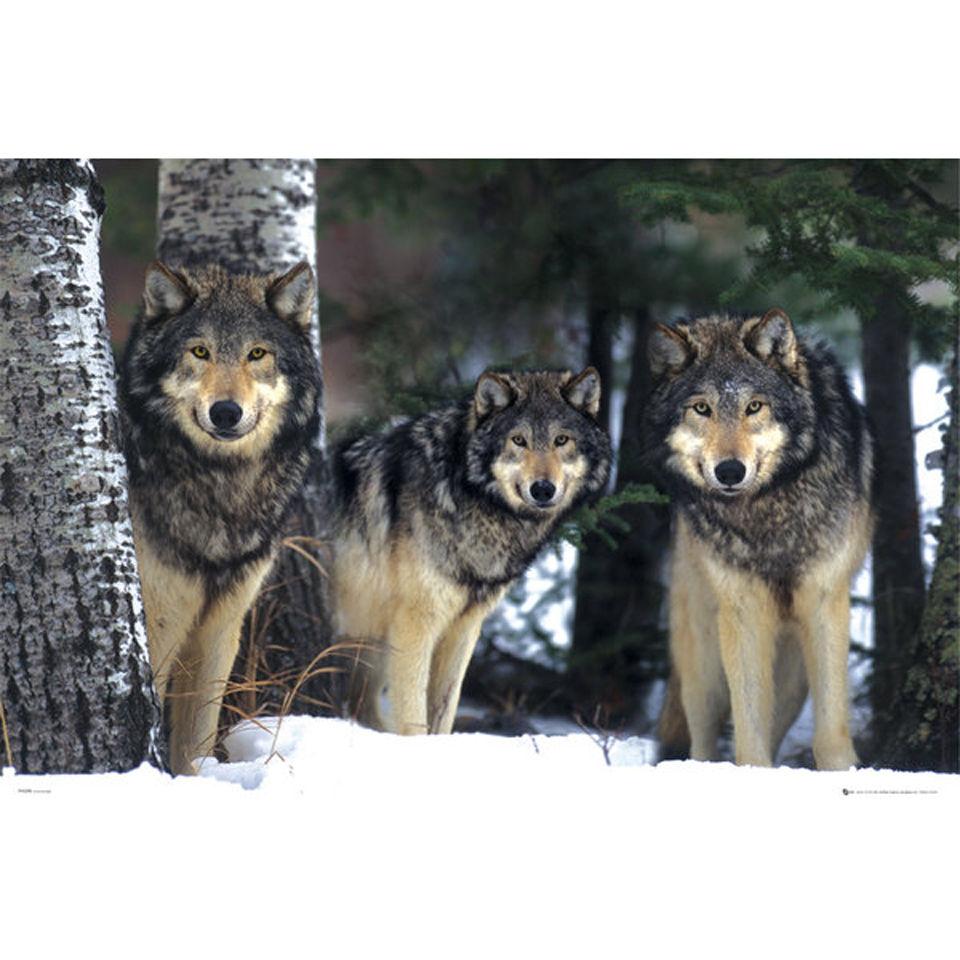 wolves-maxi-poster-61-x-915cm