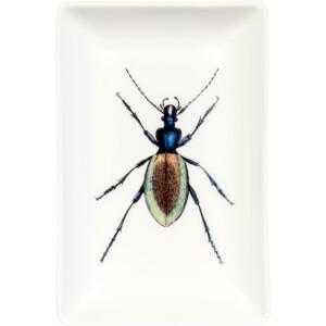 Curios Trinket Print Tray - Beetle