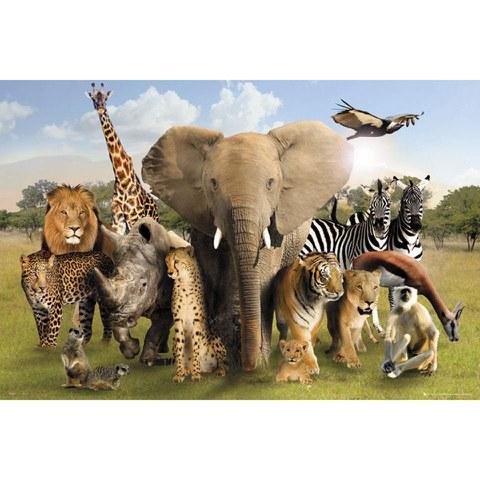 Wild World - Maxi Poster - 61 x 91.5cm