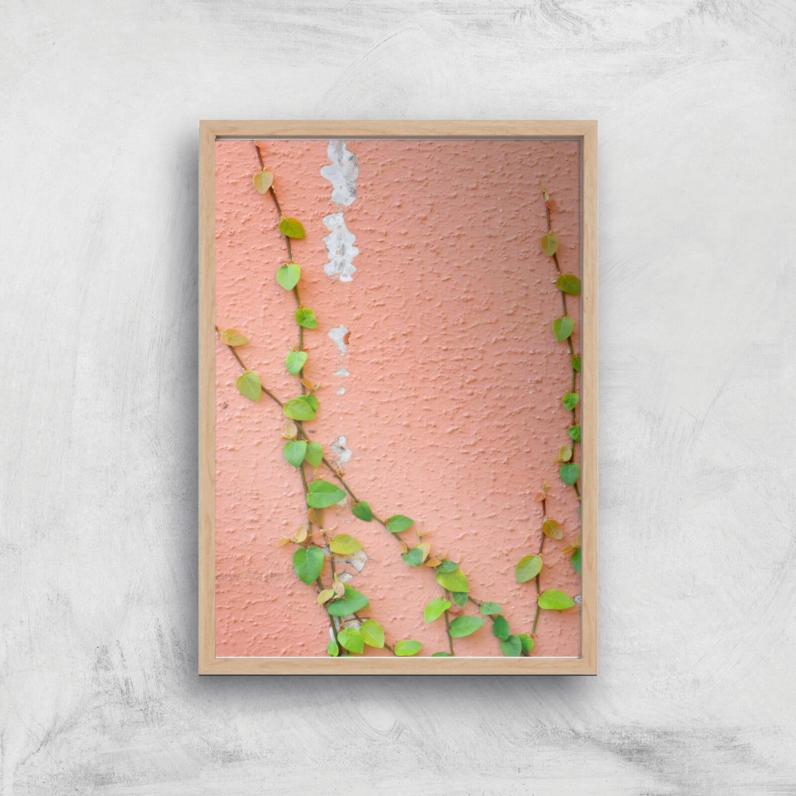 Climbing Ivy Giclee Art Print   A4   Wooden Frame