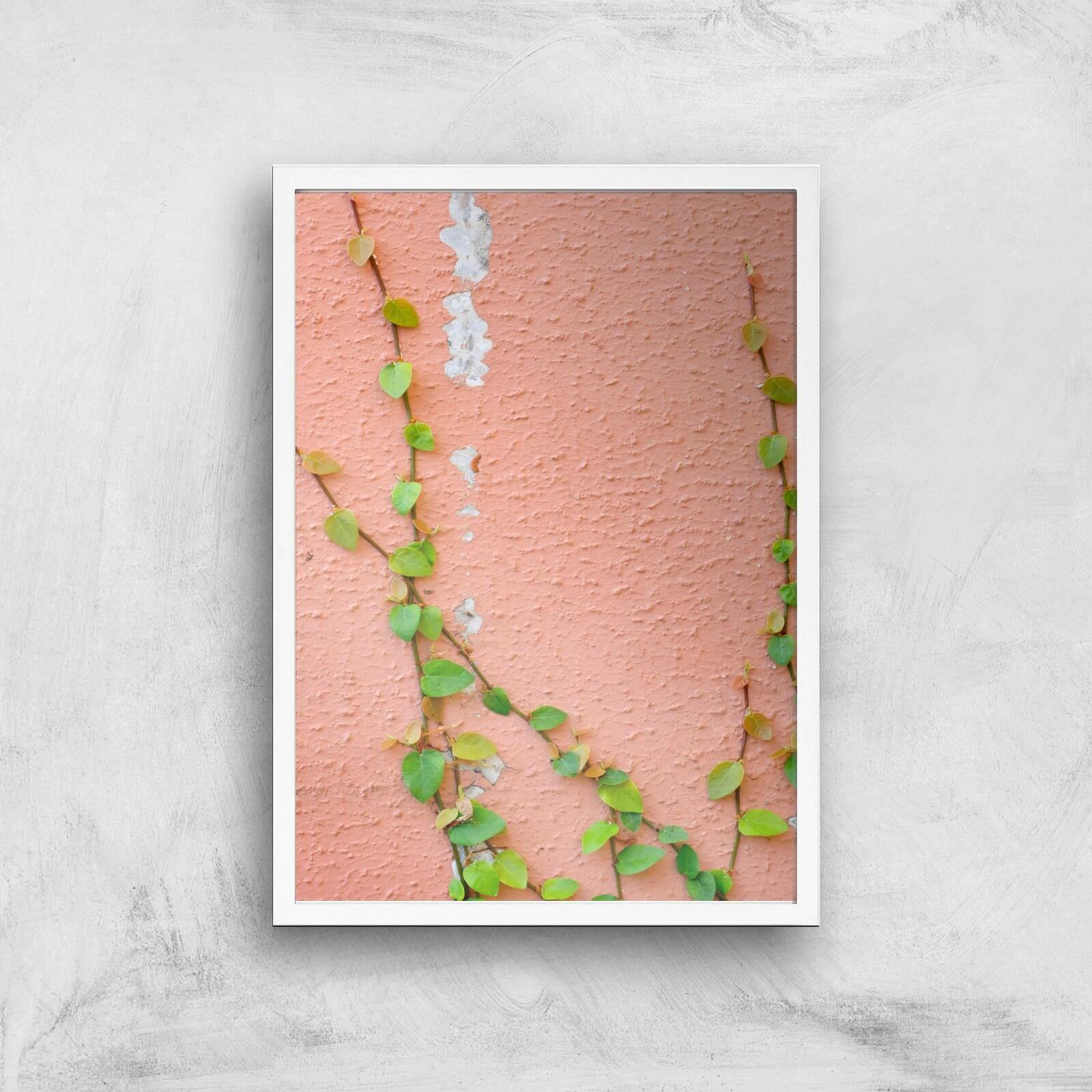 Climbing Ivy Giclee Art Print   A4   White Frame