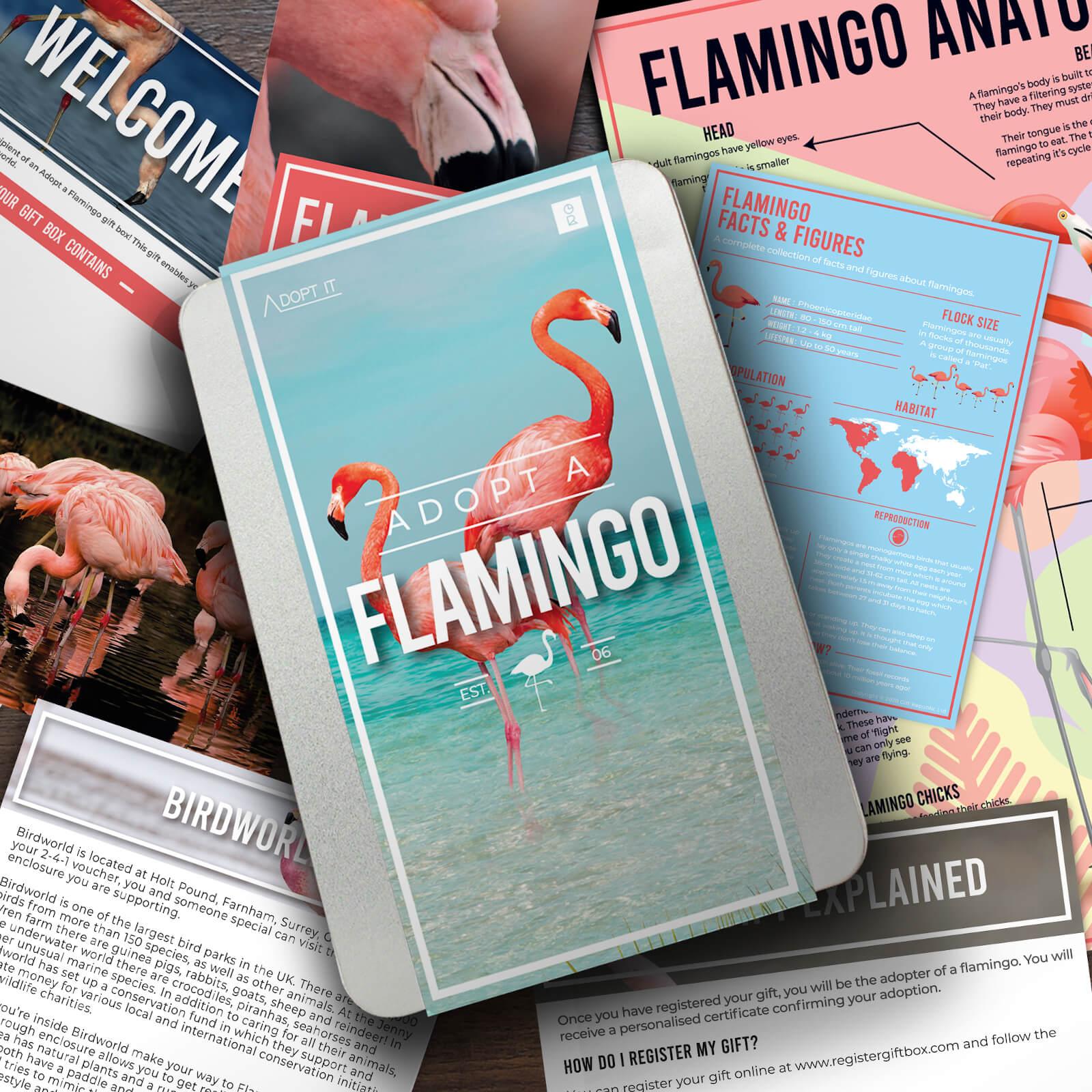Image of Adopt a Flamingo