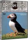 british-birds-mountains-coasts-cliffs