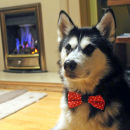 reversible-pet-bow-tie