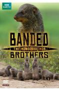 Banded Brothers The Mongoose Mob