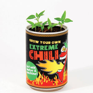 Grow Your Own Extreme Chilli