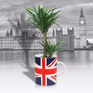 Giant Union Jack Mug Plant Pot