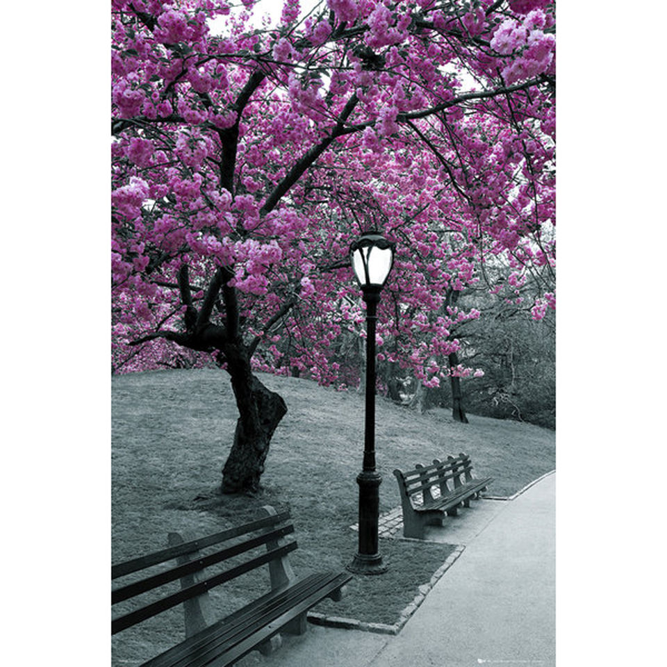 central-park-blossom-maxi-poster-61-x-915cm