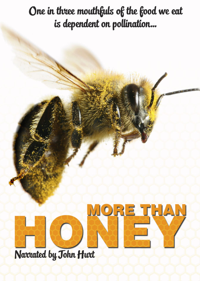 more-than-honey