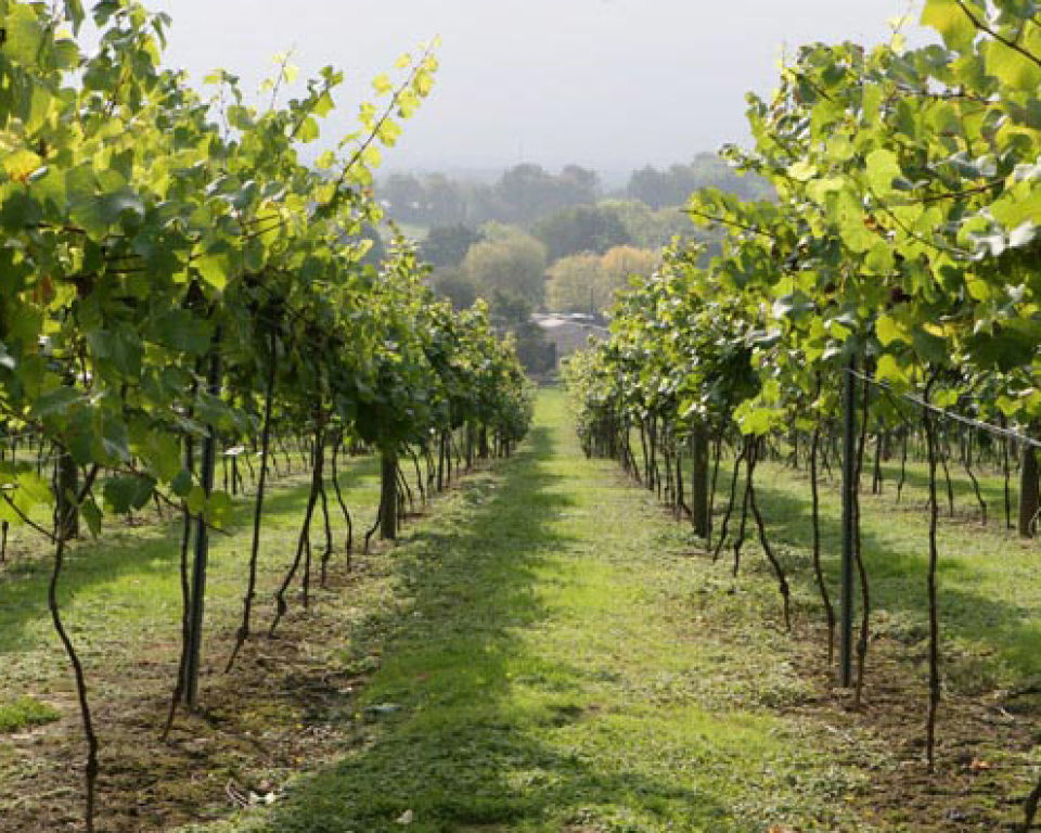 british-vineyard-tour-tasting-with-lunch-for-two