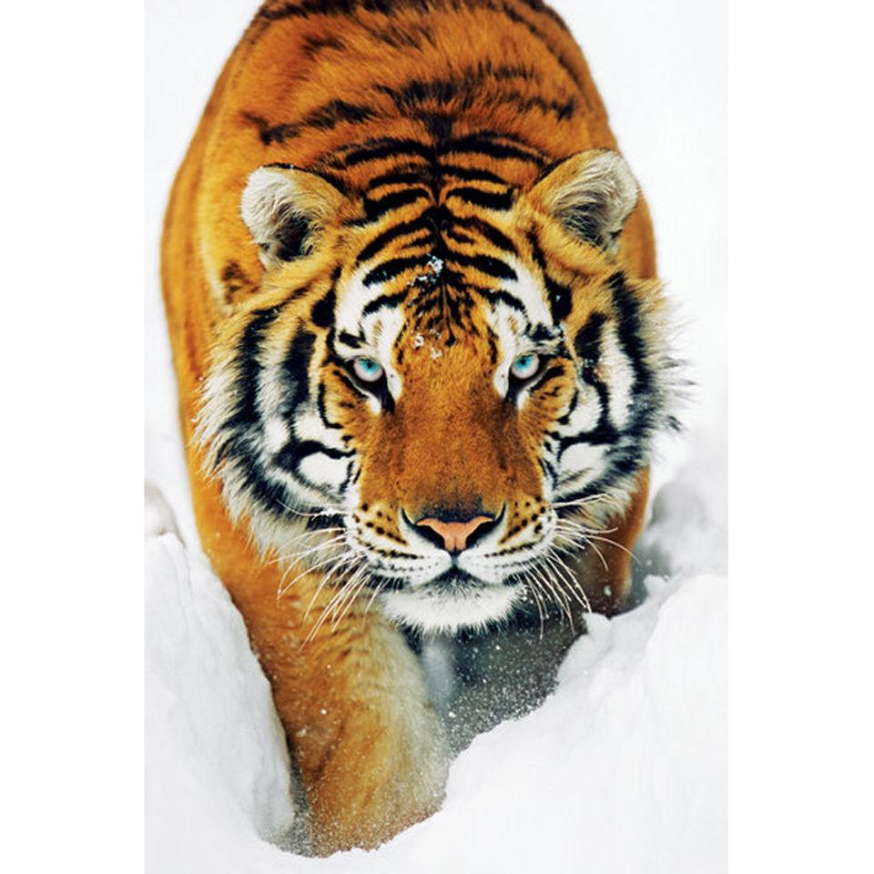 tiger-snow-maxi-poster-61-x-915cm