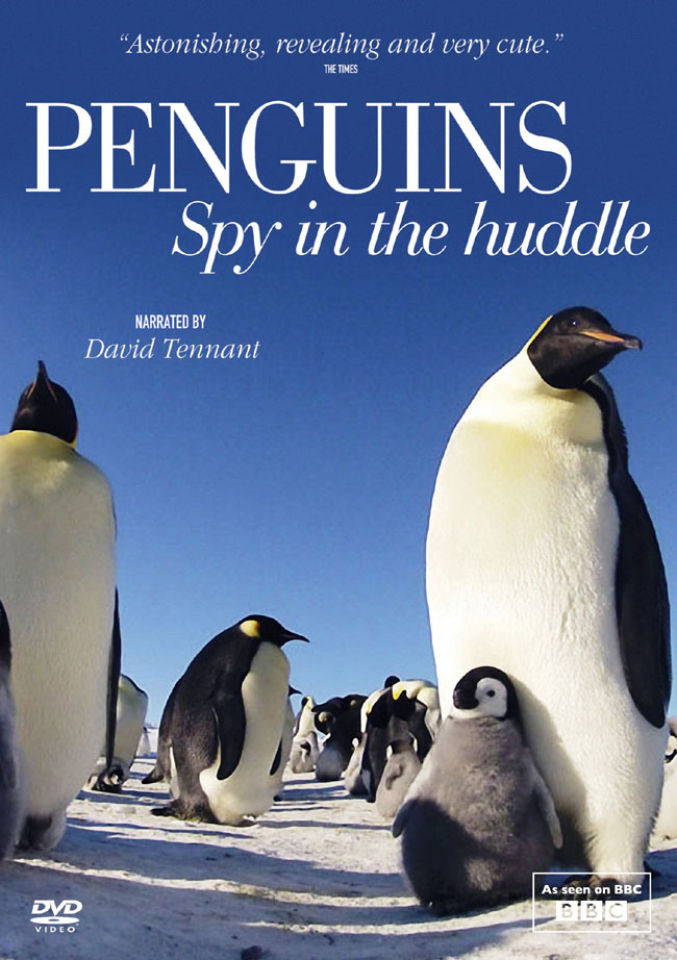 penguin-spy-in-the-huddle