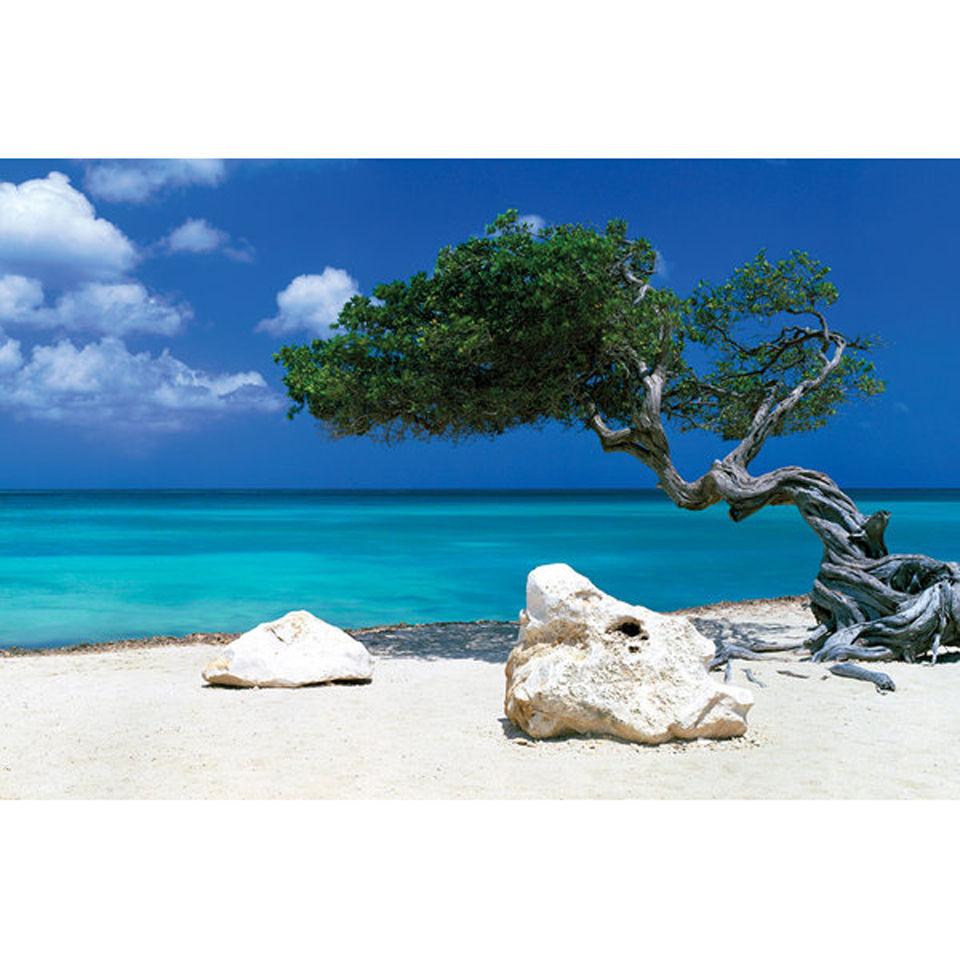 tom-mackie-divi-divi-tree-maxi-poster-61-x-915cm