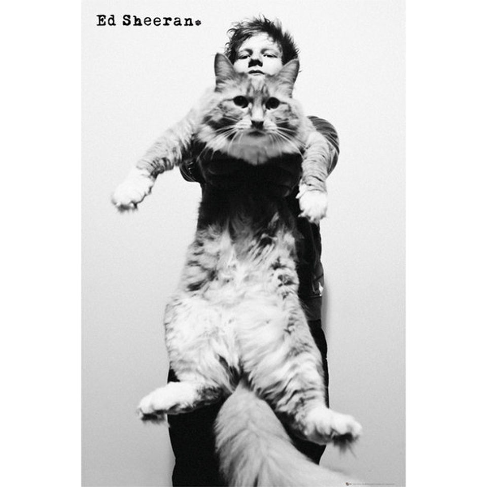 ed-sheeran-cat-maxi-poster-61-x-915cm