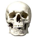 skull-face-mask