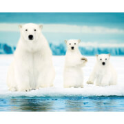 Polar Bears Family - Mini Poster - 40 x 50cm
