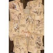 Fantastic Beasts Field Notes - 61 x 91.5cm Maxi Poster