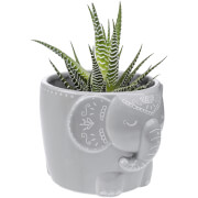 Sass & Belle Mandala Elephant Large Planter