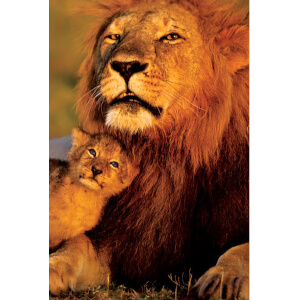 Lion And Cub Maxi Poster - 61 x 91.5cm