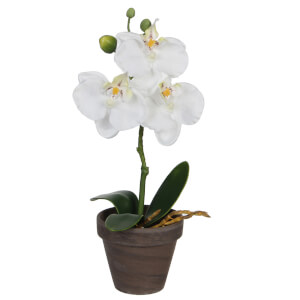 Phalaenopsis Pot - Stan Grey