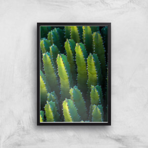Cactus From Above Giclee Art Print