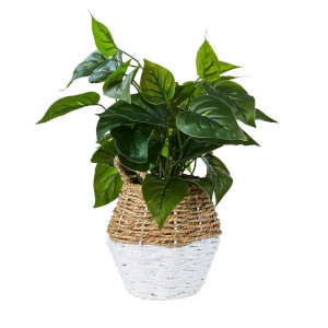 Plant in Two Tone Basket - White & Natural