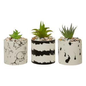 Mono Black & White Succulents - Set of 3