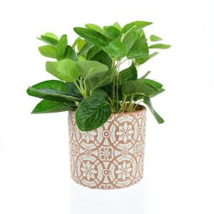Leafy Plant in Terracotta Pot