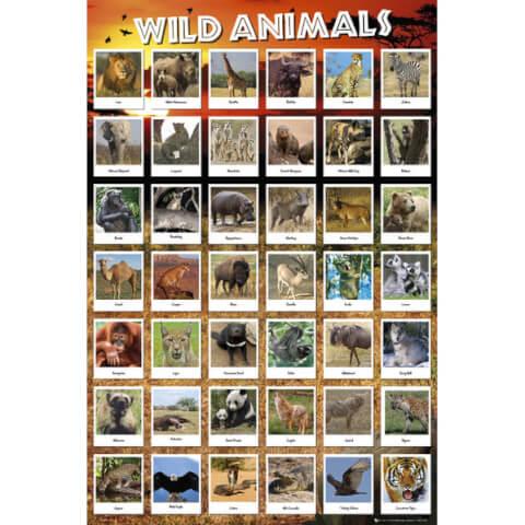 Animals Wild - Maxi Poster - 61 x 91.5cm