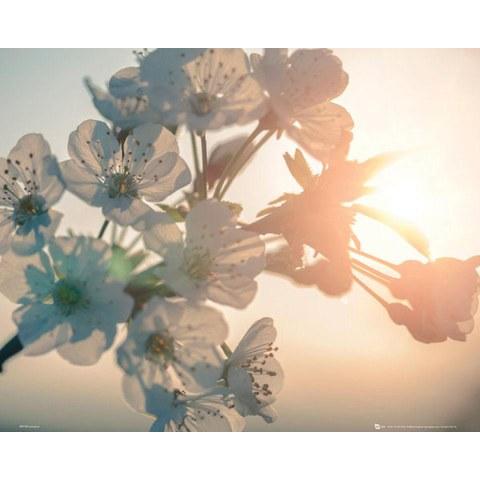 Blossom Sun - Mini Poster - 40 x 50cm