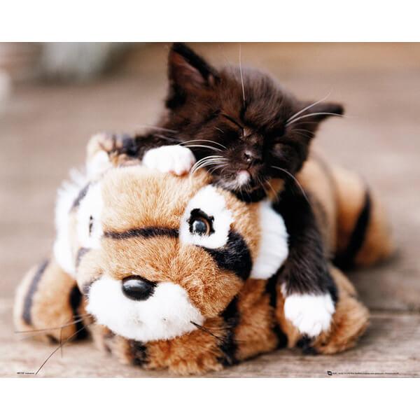 Kitten Toy Tiger - Mini Poster - 40 x 50cm