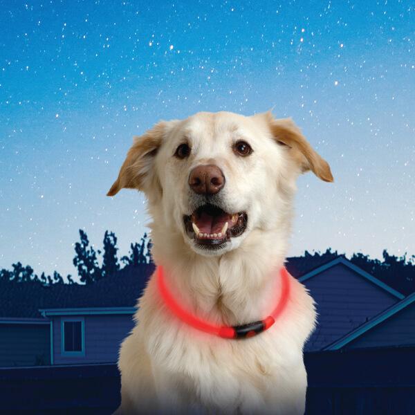 Collier pour Chien Sécurité LED -Nite Howl