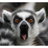 Meet The Animals at Bristol Zoo Including Entry for Two and Free Drink: Image 1
