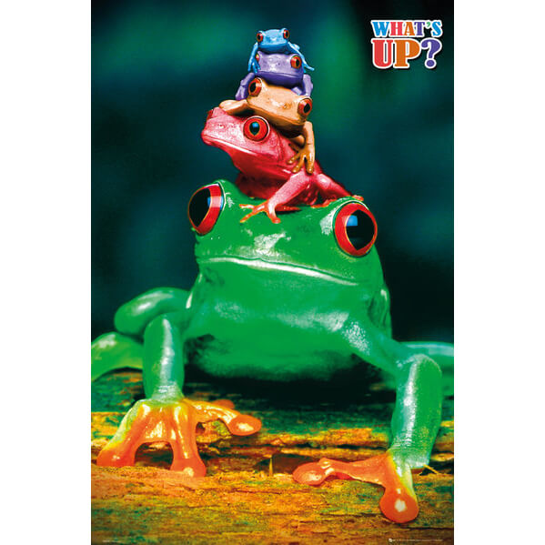 5-frogs-colours-maxi-poster-61-x-915cm