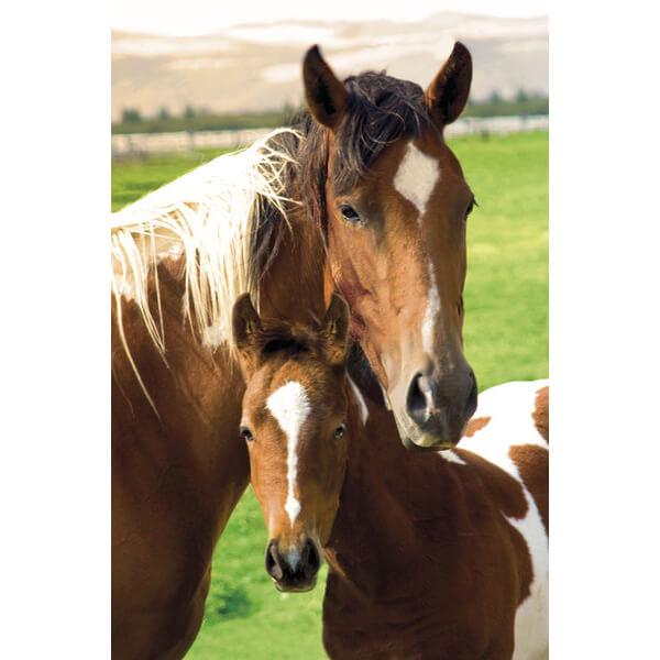 horses-mare-foal-maxi-poster-61-x-915cm