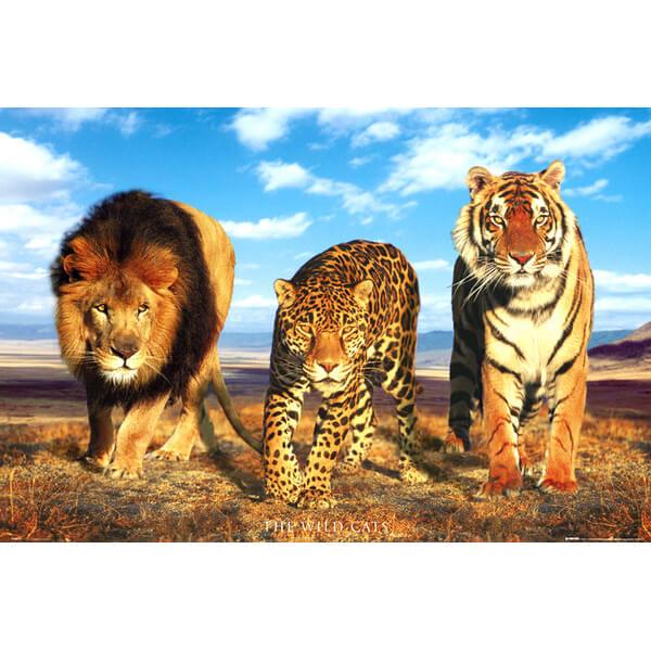 wild-cats-maxi-poster-61-x-915cm
